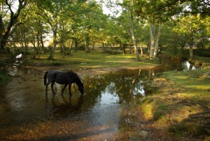 Free Southampton attractions - The New Forest
