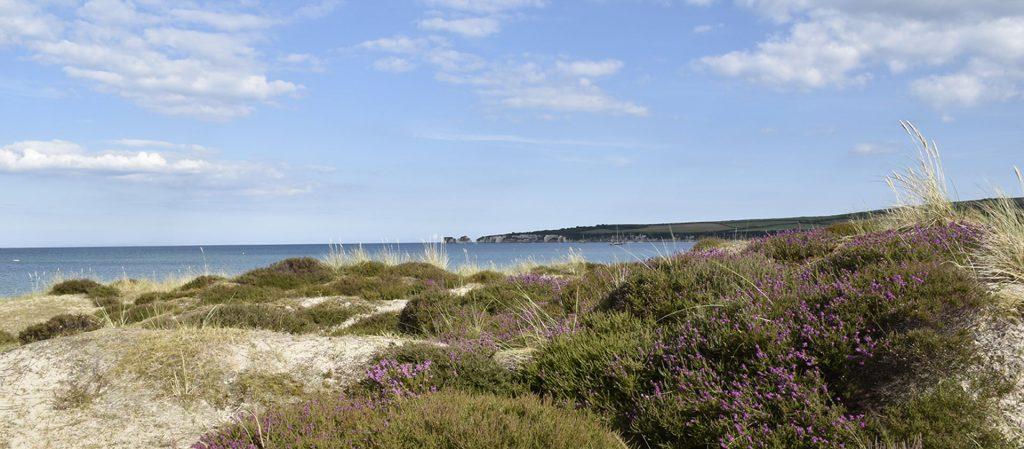 Knoll beach, Studland